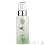 Etude House White Tea Lotion